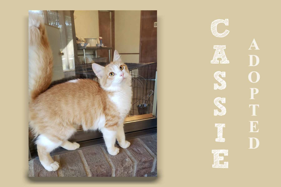 cassieAdopted